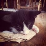 Om the kitten
